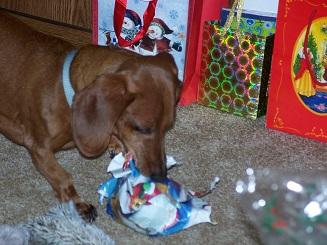 Dipper @ Christmas