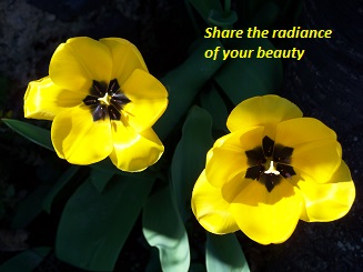 Tulips - Share the Radiance of Your Beauty