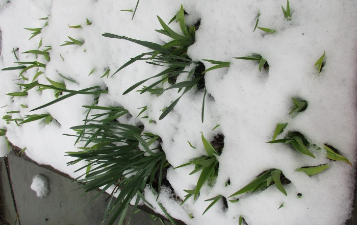 Spring Crap